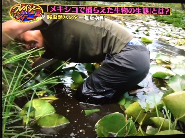 爬虫類ハンター 加藤英明 ブログ